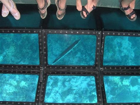 Glass Bottom Boat Tours In Destin Florida by Charlie The Barracuda From Glass Bottom Boat Picture Of