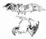 Coloring Fox Flying Pages Bat Animals Animal Winged Printable Print Sheet Template sketch template