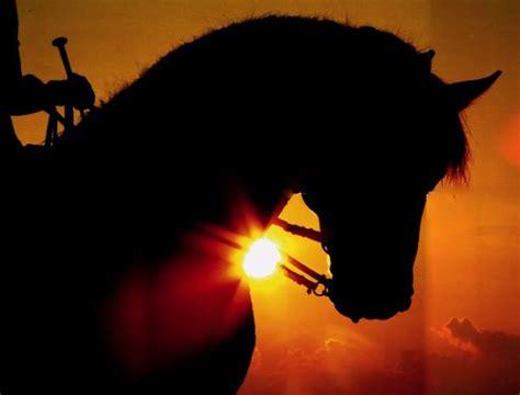welche pferderasse passt zu mir