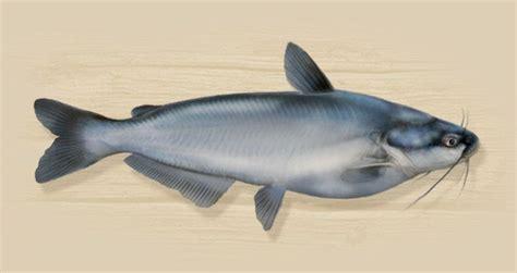 images  catfishing  pinterest catfish