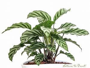 Zimmerpflanzen Sonniger Standort : 25 best ideas about pflegeleichte pflanzen on pinterest pflegeleichte balkonpflanzen ~ Whattoseeinmadrid.com Haus und Dekorationen