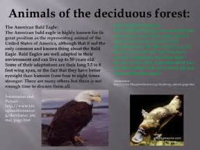 Eagle Cabinets by The Deciduous Forest