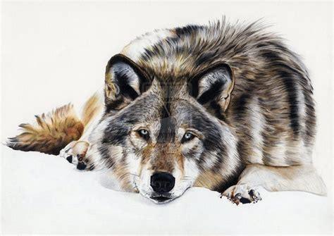 Loup/wolf By Sadness40 On Deviantart
