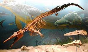 Basilosaurus Fossil - Picture of Smithsonian National ...