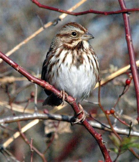 common gbbc birds audubon pennsylvania