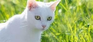 Repulsif Pour Urine Chat : repousser les chats 6 r pulsifs chats naturels pour duquer ~ Melissatoandfro.com Idées de Décoration
