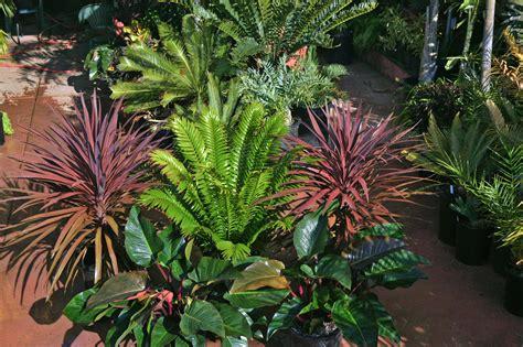 Palm Tree Nursery San Diego