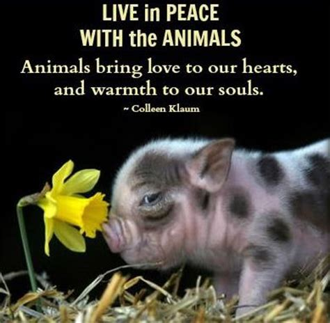 peace  love animals quotes quotesgram
