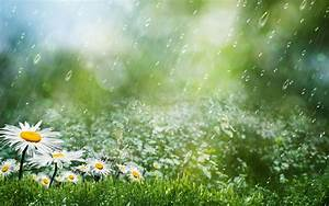 Best Collection Beautiful Rain HD Wallpapers For Desktop