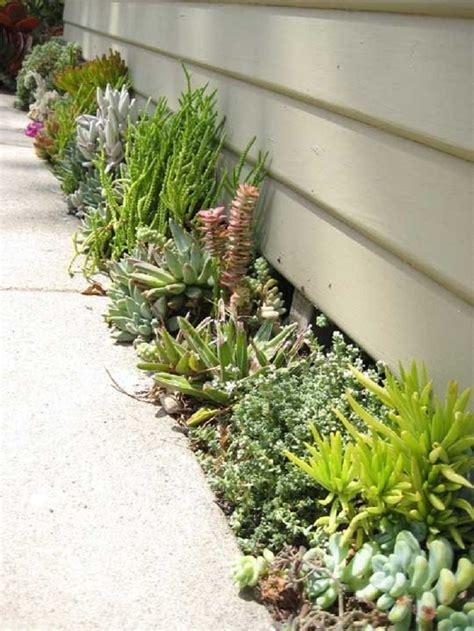 succulent flower bed top 10 diy outdoor succulent garden ideas top inspired
