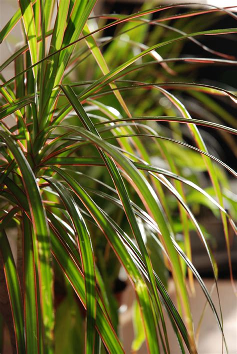 plantes verts d interieur contre la pollution int 233 rieure adoptez les plantes vertes n 233 oplan 232 te