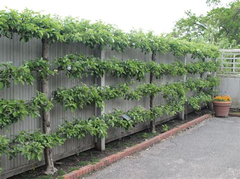 tree bed frame creative fences the plant farm