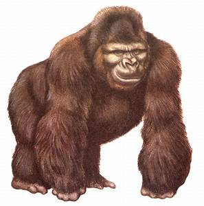 Best Gorilla Clipart #17733 - Clipartion.com