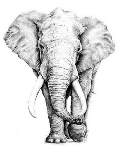 """Elephant"" by holly92 | Redbubble"