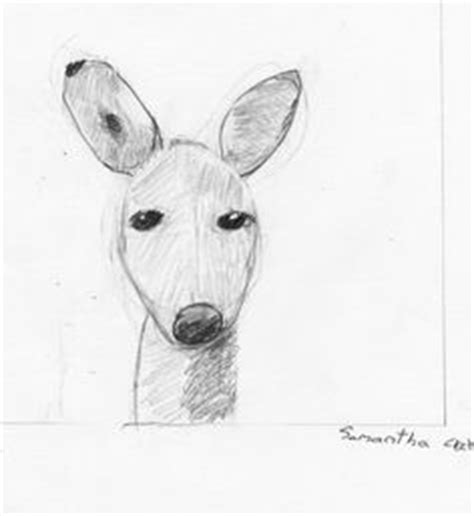 animal drawing classes rabbit  anna proportions shapes