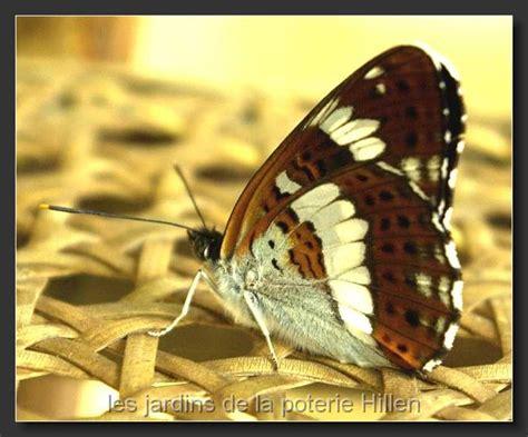 la faune des jardins de la poterie hillen