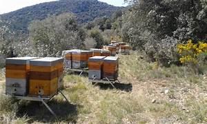 Leboncoin 31 Haute Garonne : les ruchers sainte marie genos haute garonne 31 ~ Dailycaller-alerts.com Idées de Décoration
