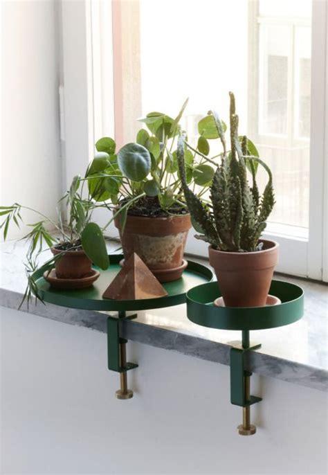 Best Indoor Window Sill Plants by Best 25 Window Plants Ideas On