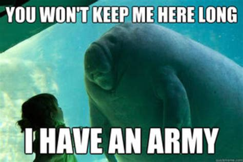 Overlord Memes - overlord manatee meme