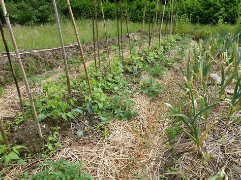 chambre des metiers cote d or taille de l olivier en pleine terre 13 bienvenue dans mon jardin 224 pl233d233liac