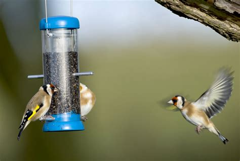 how to attract birds to your garden 10 top tips notes