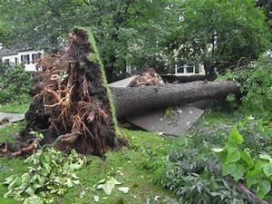 Bäume Für Den Garten : haus m bel b ume f r den garten baumscheibe bepflanzt ~ Lizthompson.info Haus und Dekorationen