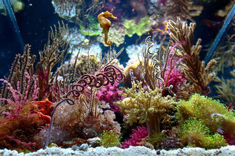 2014 Featured Nano Reefs