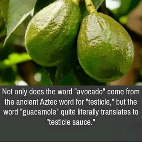 Where Does Meme Come From - not only does the word avocado come from the ancient aztec word for testicle but the word