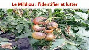 Comment Tuteurer Les Tomates : le mildiou comment l 39 identifier et lutter youtube ~ Melissatoandfro.com Idées de Décoration