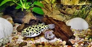 Aquarium Berechnen : kleines aquarium die kosten im berblick ~ Themetempest.com Abrechnung