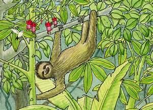 Sloth  Three