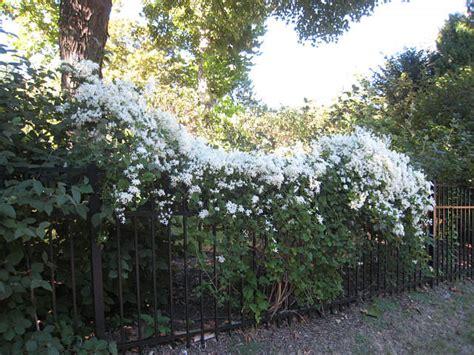 wall fence gardens landscapeadvisor