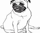 Puppy Pug Realistic Coloring Pages Drawing Cute Outline Printable Getdrawings Clipartmag Sheets Zentangle Pdf sketch template