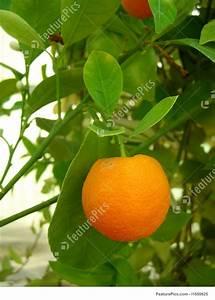 Miniature Orange Stock Image I1650625 At Featurepics