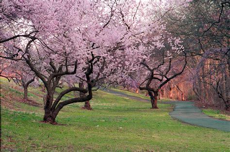 branch brook gardens branch brook park
