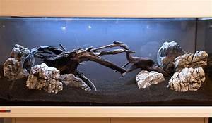 Aquarium Gestaltung Bilder : aquarium einrichten anleitung ~ Lizthompson.info Haus und Dekorationen