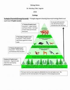 Biology Notes Dr  Hensley    Mrs  Ingram 2016 Trophic Levels