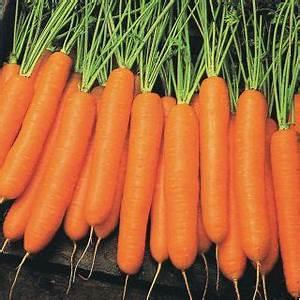Carrots - Vegetables | Veseys  Carrot