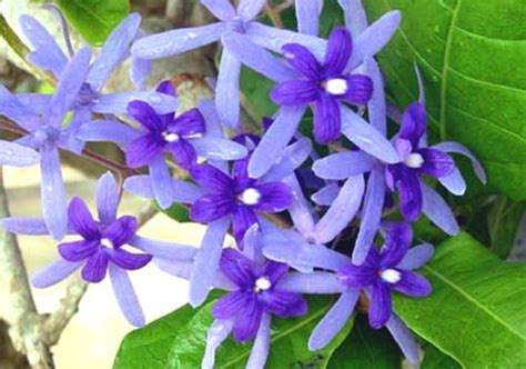 ดอกไม้ไทย - Noy wasitthi