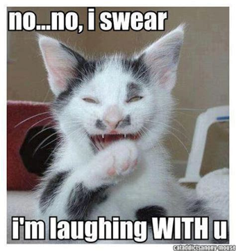 Laughing Cat Meme 10 Funniest Lolcats Fotos For