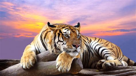 Cool Baby Animal Wallpapers Wild Animal Wallpapers Group With 19 Items