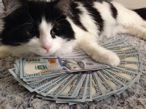 money cat money cat pictures photos and images for