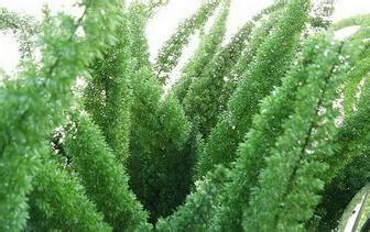 jual tanaman hias macam macam tanaman hias