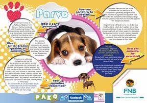 scentific poster pako kids magazine