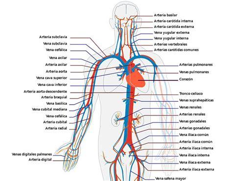 191 conoces los sistemas y aparatos cuerpo humano