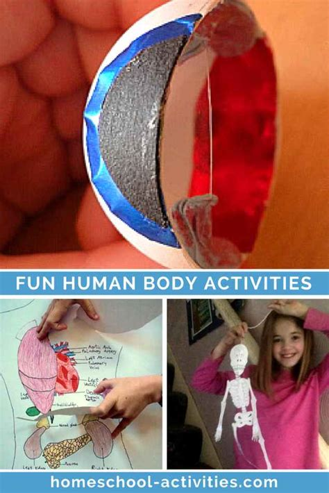 human body activities for preschoolers human for activities and facts 737