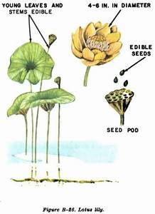 The Ultimate Guide To Wild Edible Plants
