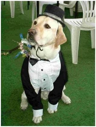 dogs budgeted wedding