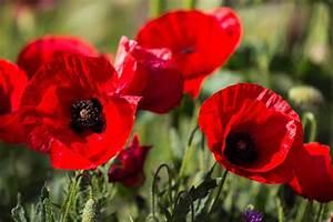 Poppy Flower Part 2 – WeNeedFun