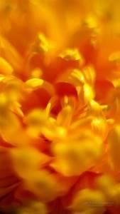 Schöne 3d Bilder : die besten 20 hintergrundbilder kostenlos herunterladen ideen auf pinterest m wen niedliche ~ Eleganceandgraceweddings.com Haus und Dekorationen
